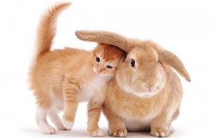 cute-rabbit-94a6479a151629cfd3a4db9bd0ca211a_h.jpg